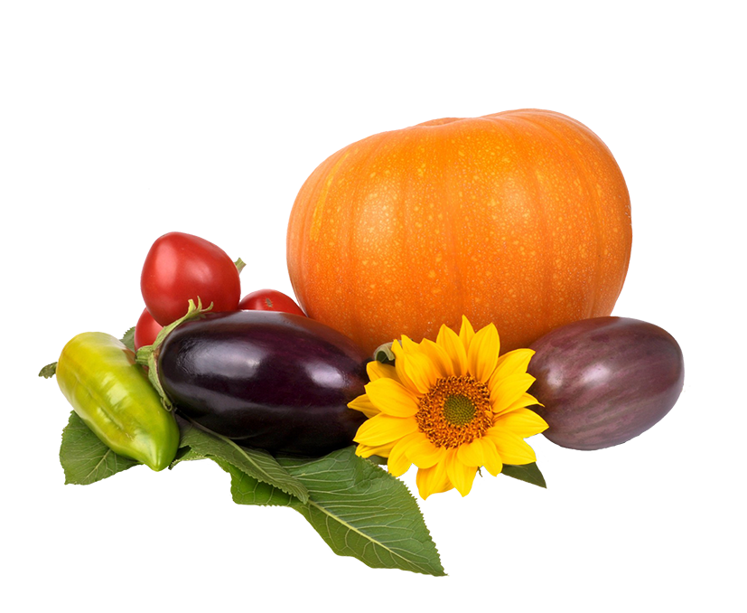 Autumn harvest of vegetables