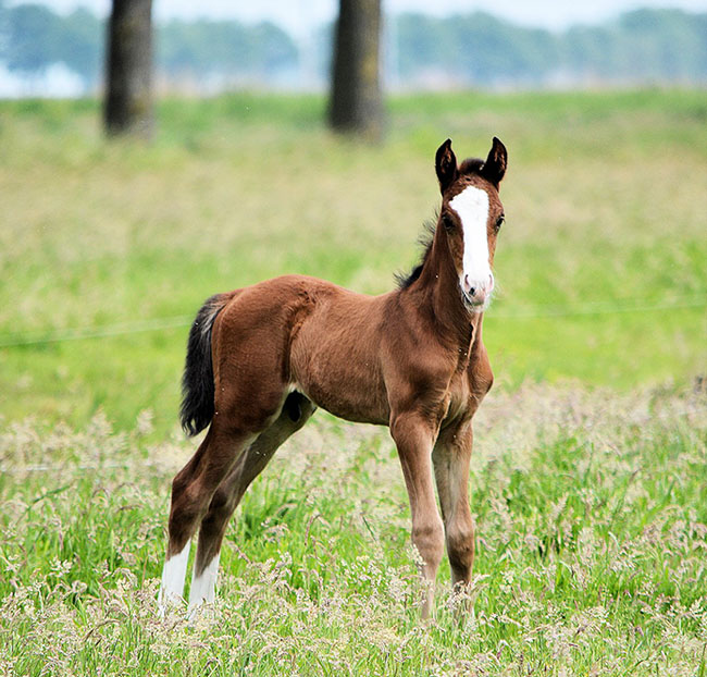 new born spring foal