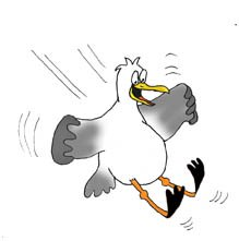 cartoon drawings of animals seagull landing