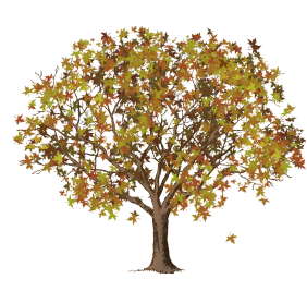 brown trunk autumn leaves tree clipart