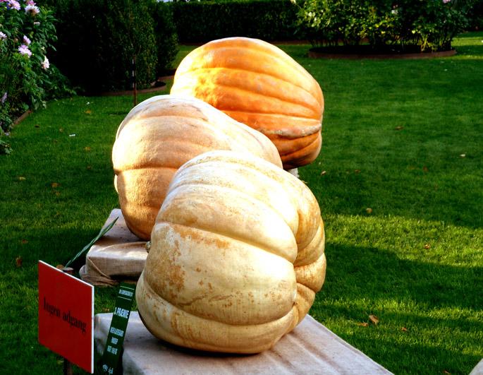 pumpkin contest for Halloween