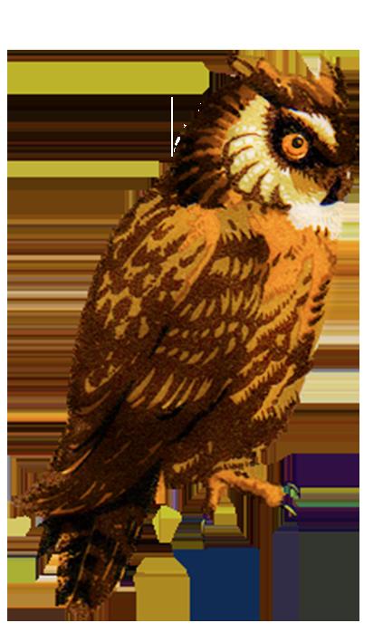 vintage owl clip art