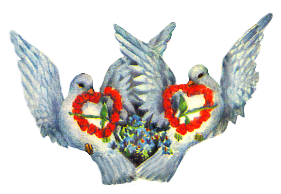 Valentine pigeons with heart of roses