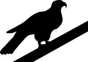Hawk silhouette resting on wicket