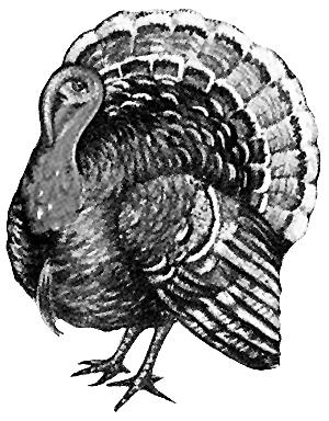turkey clip art drawing of turkey black white