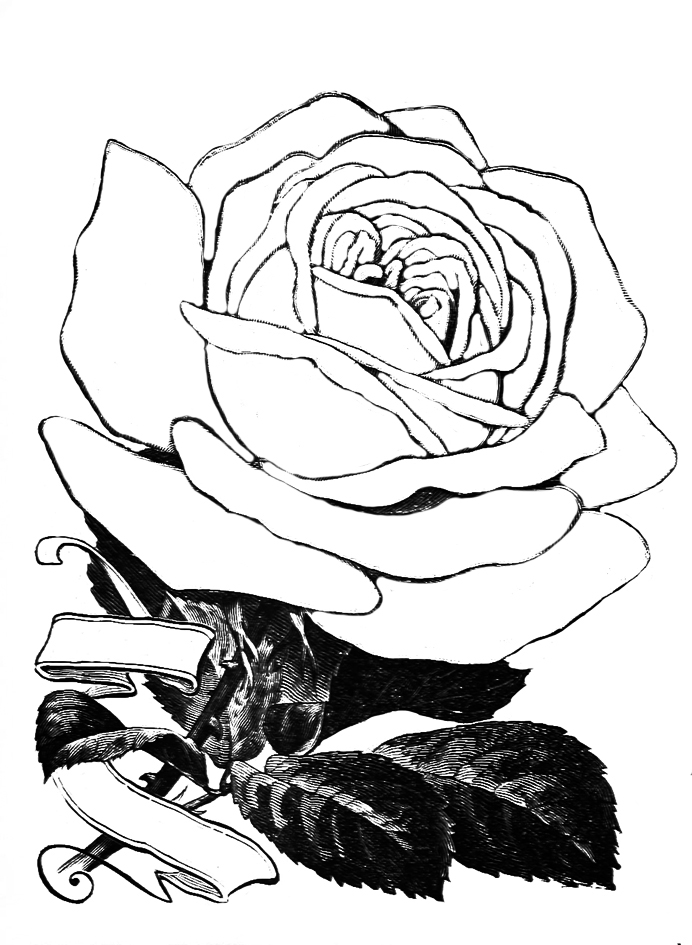 rose coloring pages with banner