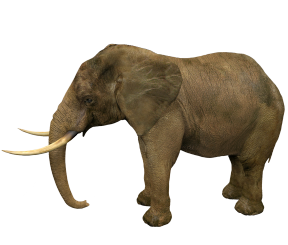 elephant transparent background