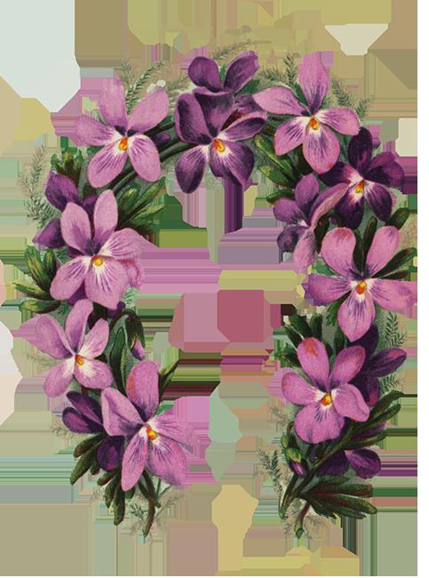 flower border with viol