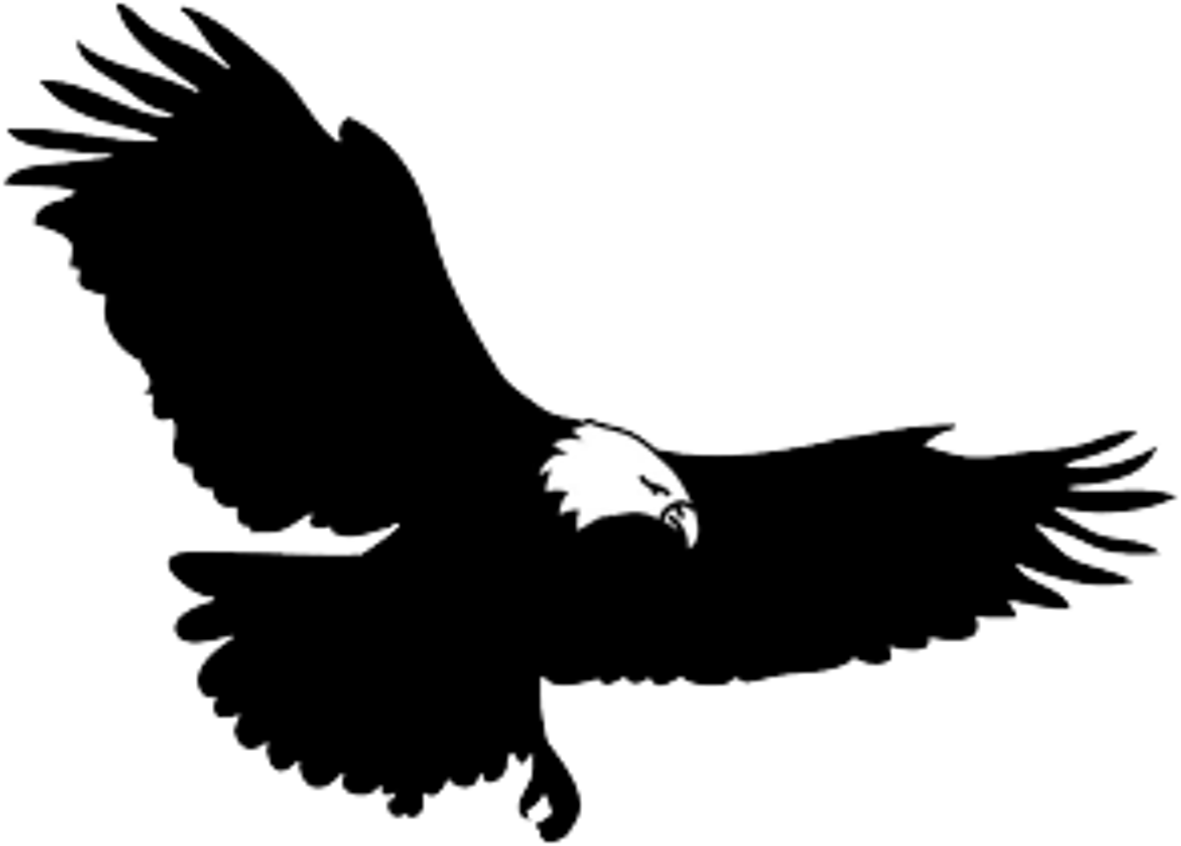 bird silhouette bald eagle flying