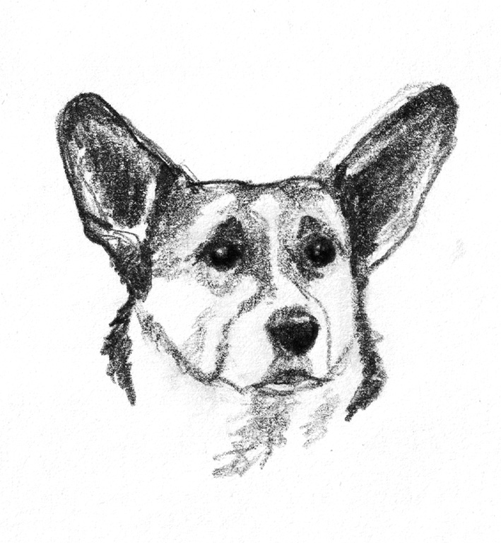 dog drawing Welch corgie cardigan