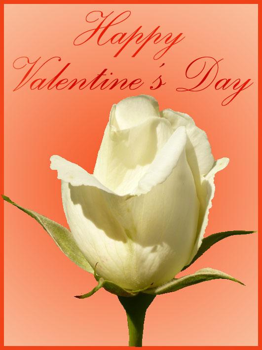 valentine greeting cards romantic white rose