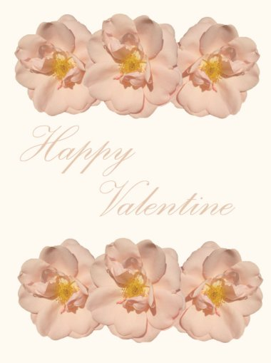 valentine greeting cards with pink roses