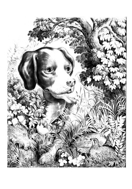 drawing of dog in nature