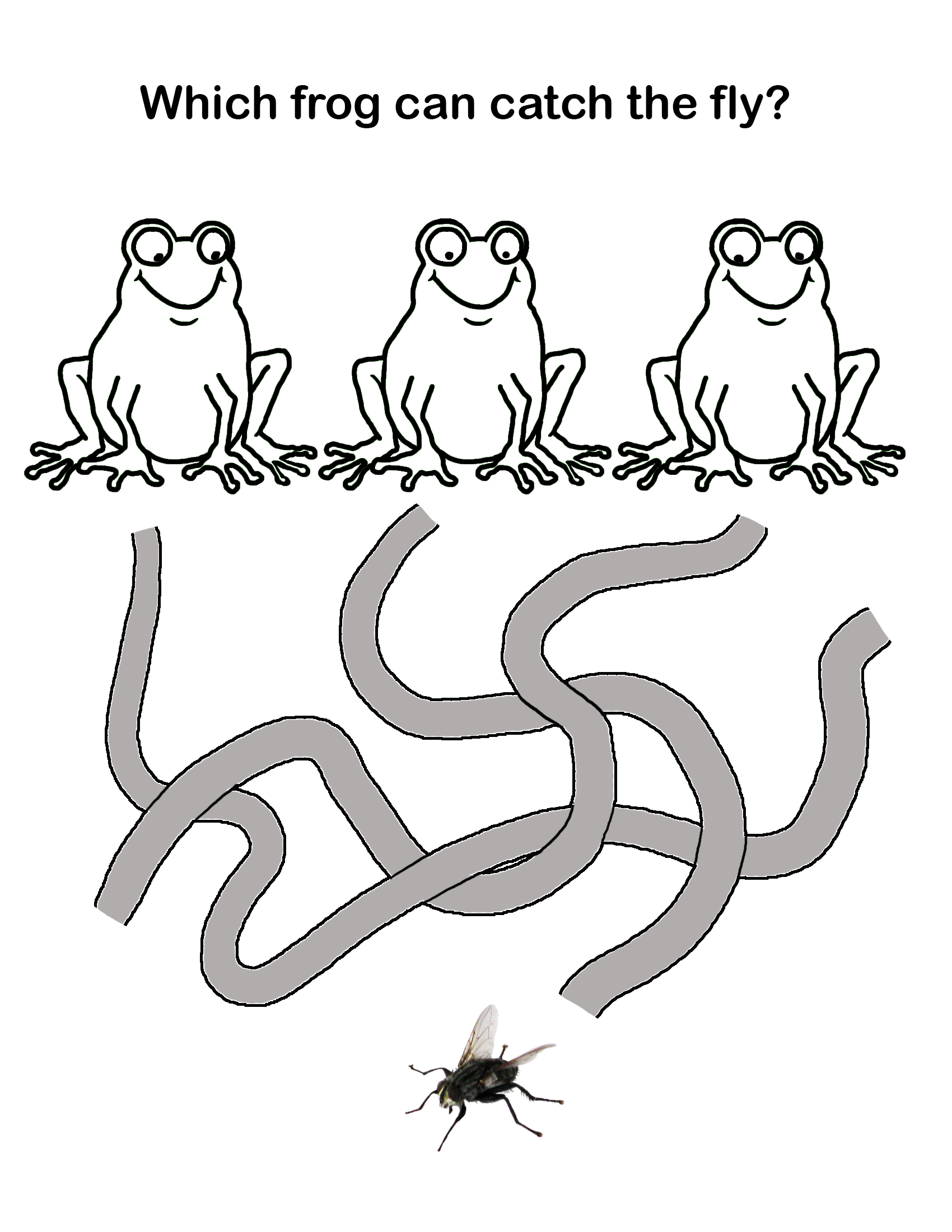 frog catch fly maze for kids