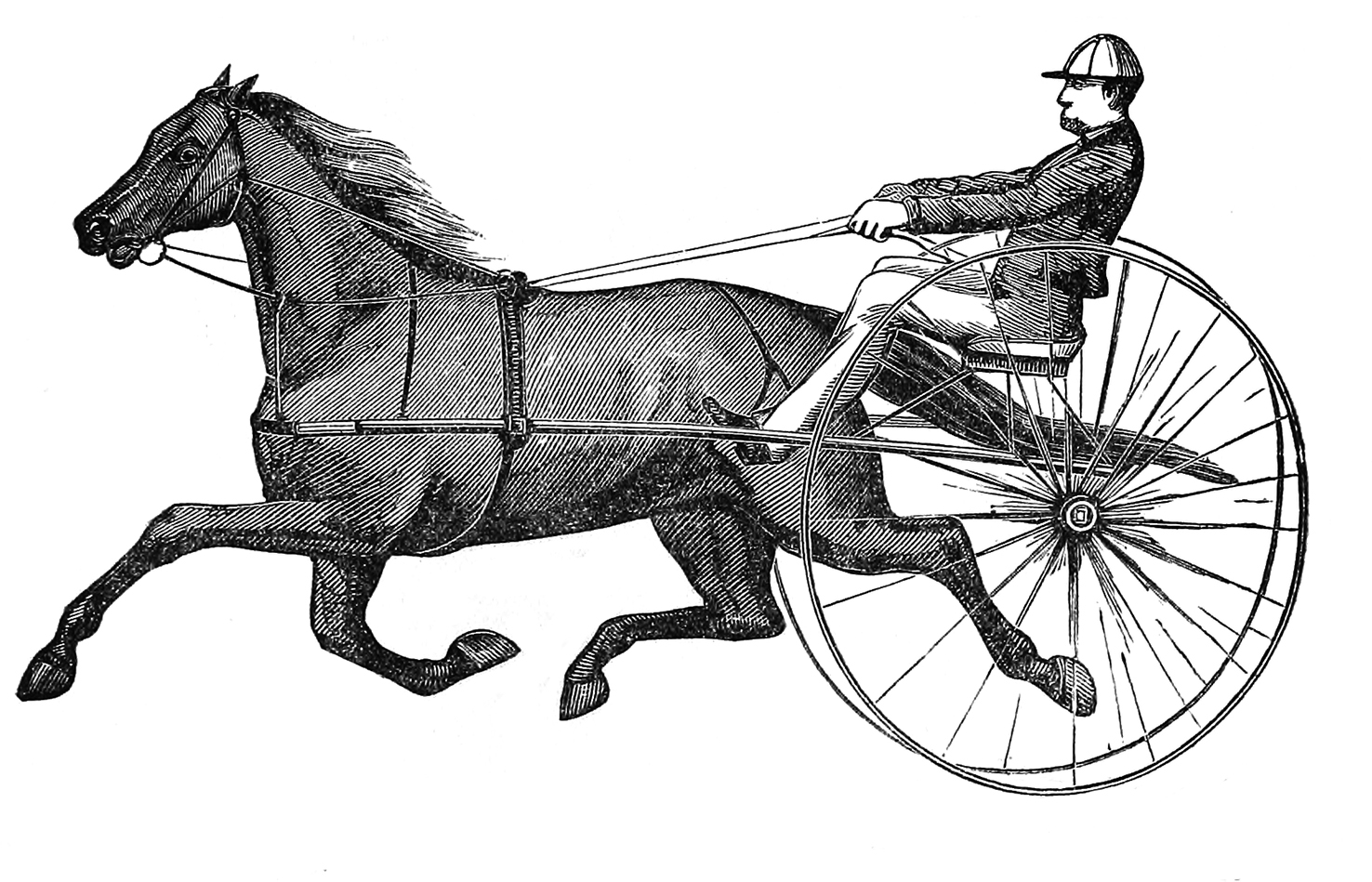 Victorian sulky horse and driver