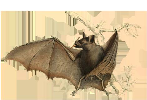 drawing of bat in tree