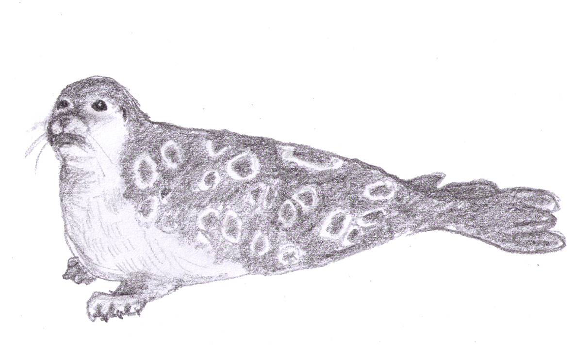 pencil drawing of seal