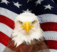 Eagle and USA flag