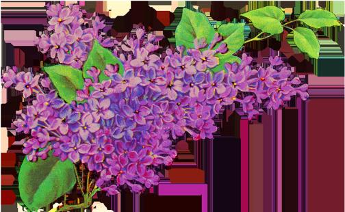 liliac flower decor