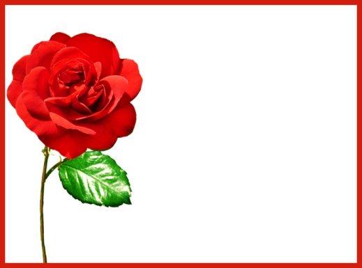 single red rose template Valentine