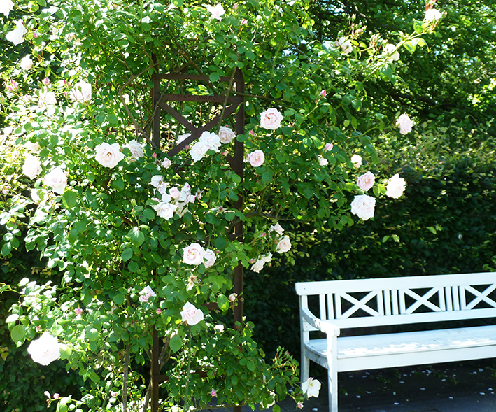 scenery white bench pink roses