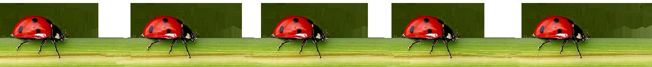 border of ladybugs