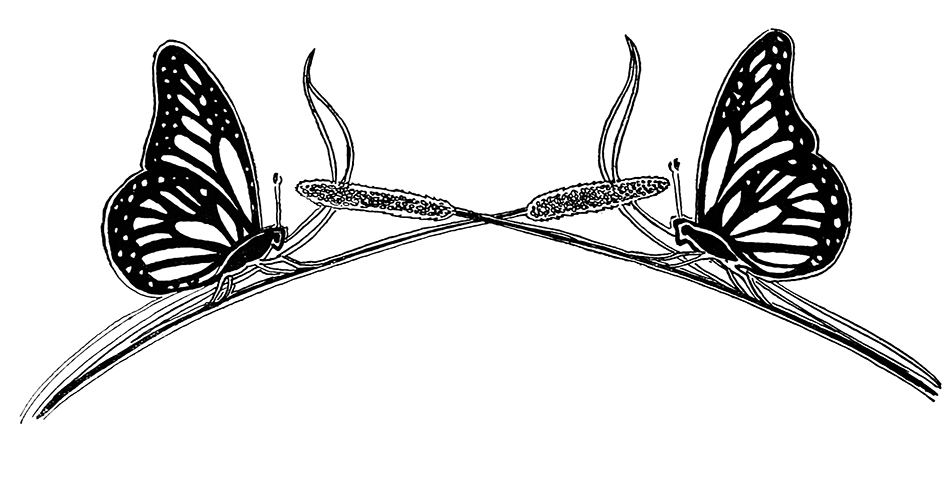 Two butterfly graphic