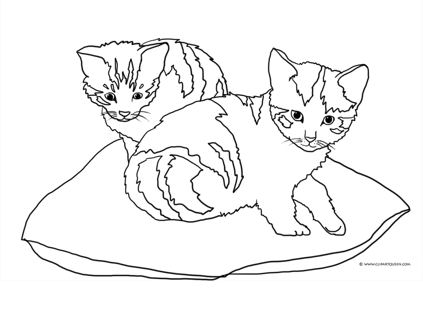two multicolored cats on pillow