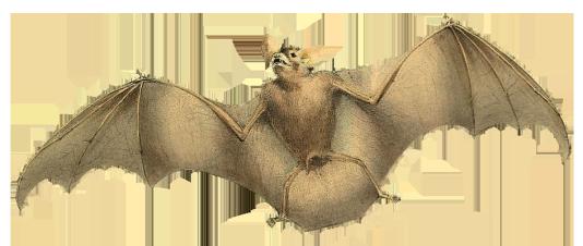 image of flying bat