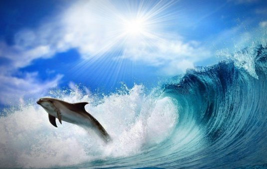 dolhpin pictures of dolphin jumping in a wave