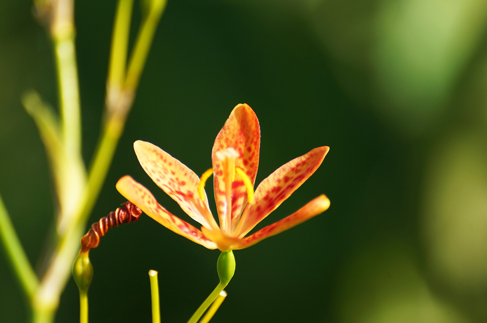 Artistic photo of orange flower