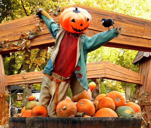 Pumpkin man with bird selling pumpkins for Halloween