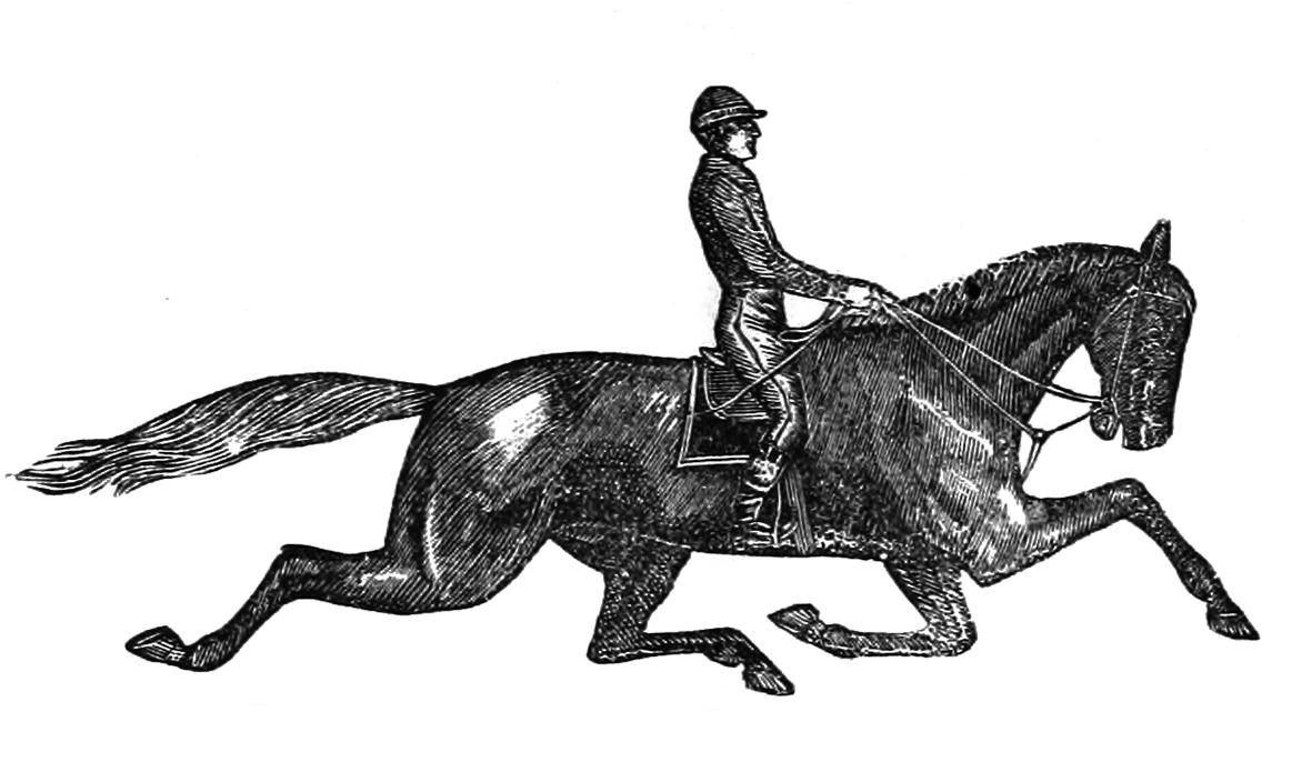 horse with jockey trotting