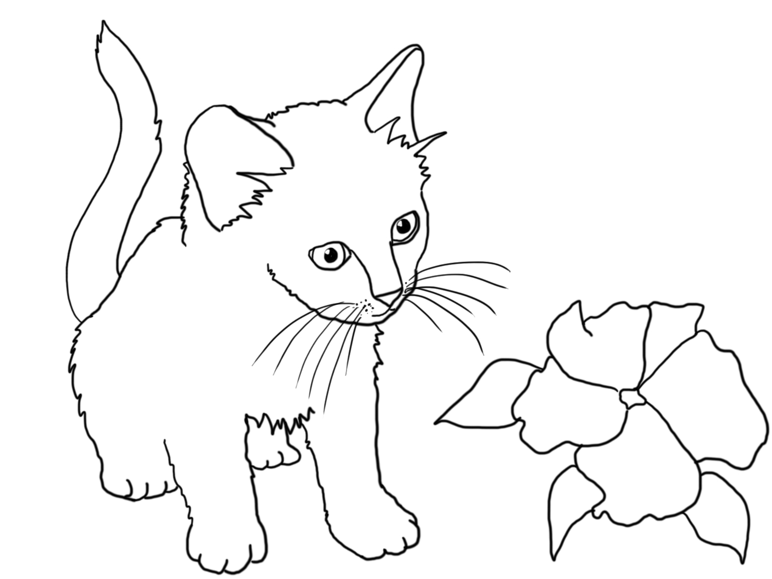 coloring page with kitten looking at a flower