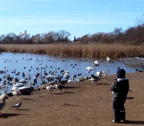 first day of spring child feeding wild birds