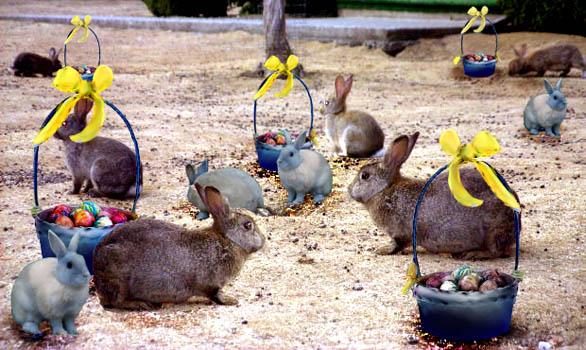 easter-clip-art-bunny-baskets-eggs
