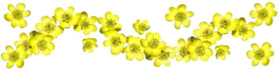 spring clipart band winter aconites
