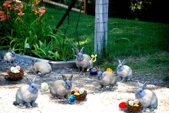 easter clip art bunny egg central