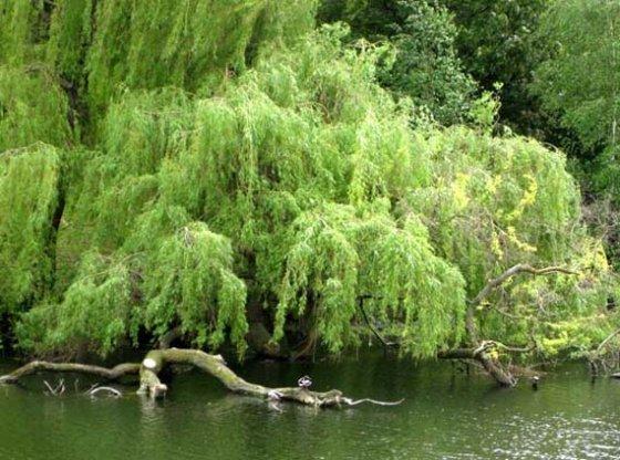 summer clipart tree lake