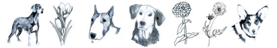 drawing-pencil-sketches-dogs-flowers