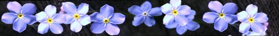 band of blue spring flowers clipart