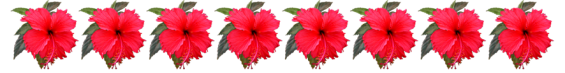 flower borders with Hibiscus