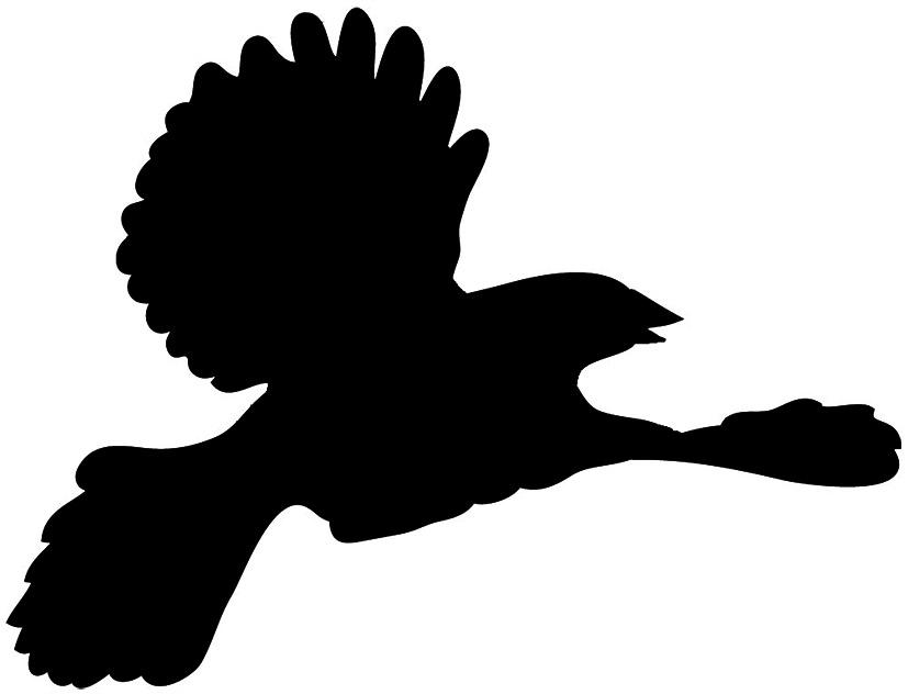Blackbird-silhouette