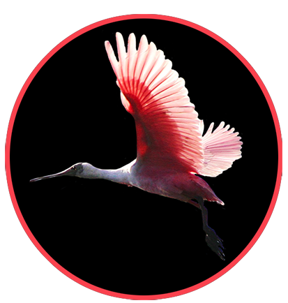 animal clip art flying pink bird black background