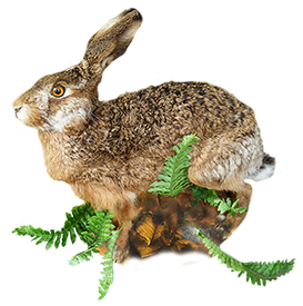 animal clip art of hare