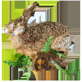 animal clip art of hare