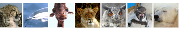 animal clipart pictures border