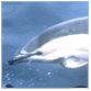 animal facts dolphin pictures