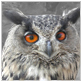 animal facts orange eyed owl