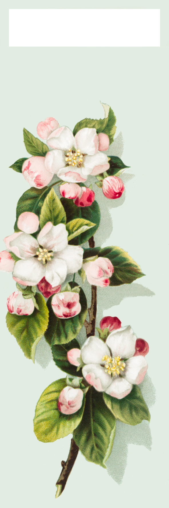 apple blossom bookmark to print